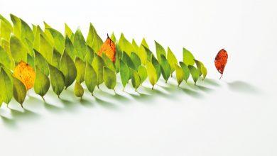 Photo of El liderazgo y la gestión para la innovación educativa